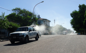 Tareas de fumigación y desratización en la ciudad